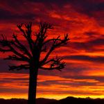 Baum im Abendrot mit Wolkenstimmung