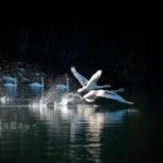 Tier- und Naturfotografie