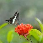 Naturimpressionen - Blumen Schmetterling - Blüte